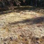 A circle of moss-covered, lichen-buried stones--and a big mystery