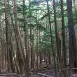 trees-sm